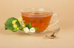 Cup of tea, linden and jasmine flowers Royalty Free Stock Photo