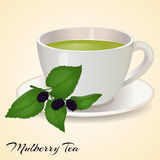 Cup of tea with Mullberry and leaves  on orange background. Mullberry Tea. Vector illustration. Royalty Free Stock Image