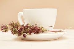 A cup of tea. A cup of organic thyme tea (thymus serpyllum Stock Photos
