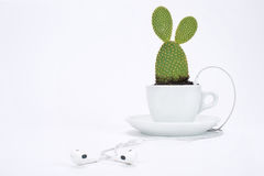 Cup of tea with plant and headphone Stock Images