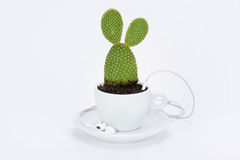 Cup of tea with plant and headphone Royalty Free Stock Photo