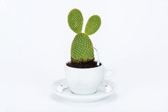 Cup of tea with plant and headphone Stock Photos