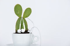 Cup of tea with plant and headphone Stock Photo