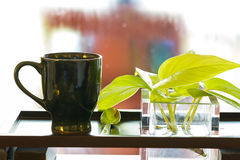 Cup of tea and plant Stock Images