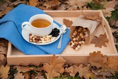 The cup of tea and the plate with hazelnuts is on a napkin. The cup of tea and the plate with hazelnuts on the napkin, standing on the tray with the foliage Royalty Free Stock Photos