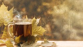 Cup of tea at a rainy window autumn mood day leaf. Fall background with copy space stock photos