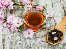 Cup of tea and sakura blossom Stock Image