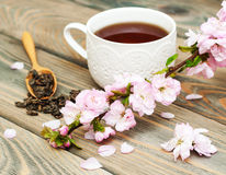 Cup of tea and sakura blossom Royalty Free Stock Image