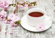 Cup of tea and sakura blossom Royalty Free Stock Image