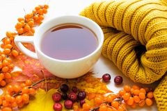 A cup of tea with sea-buckthorn and cranberry. White porcelain cup of black strong tea, sea-buckthorn and cranberry berries, knitted yellow scarf and various stock photos