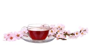 Cup of tea with a sprig of cherry blossoms isolated. On white background royalty free stock photos