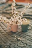 Cup of tea with spring flower cherry blossom on a wool plaid background. Vintage style Stock Photos