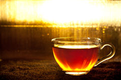 Cup of tea standing on dried leafs Royalty Free Stock Images