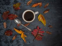 Cup of tea surrounded by colored autumn leaves stock photography
