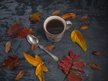 Cup of tea surrounded by colored autumn leaves royalty free stock image