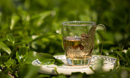 Cup of tea on the tea field in Alishan, Taiwan Royalty Free Stock Image
