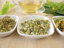 Cup of tea and tea herbs Stock Photos