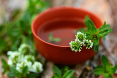 Cup of tea with thyme and clover. Cup of tea with thyme and white clover Royalty Free Stock Photography