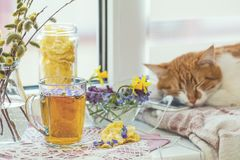 Cup of tea with violet viola, sleeping red-white cat Royalty Free Stock Photography