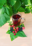 Cup of tea on a wooden table near are raspberry leaves and berries of black currant. And clean label labels tea Royalty Free Stock Photos