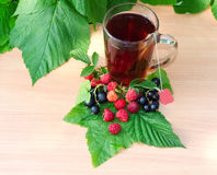 Cup of tea on a wooden table near are raspberry leaves and berries of black currant. And clean label labels tea Royalty Free Stock Photography