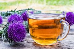 A cup of thistle tea on a woody background on nature. Thistle flowers near the cup with tea. Herbal tea royalty free stock images