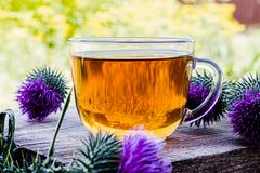 A cup of thistle tea on a woody background on nature. Thistle flowers near the cup with tea. Herbal tea royalty free stock image