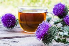 A cup of thistle tea on a woody background on nature. Thistle flowers near the cup with tea. Herbal tea stock photography
