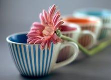 Cup und Gerber Lizenzfreies Stockbild