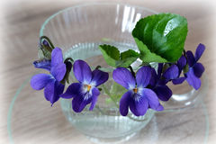 Cup of violets. Violets in the coffee cup Stock Image