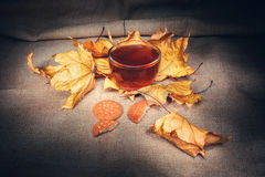 Cup of warm tea in autumn vintage. Cup of hot tea in autumn in vintage style royalty free stock images
