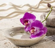 Cup of water with orchids for spa treatment Stock Photography