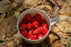 Cup of wild strawberries Stock Images