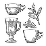 Cup wit tea and branch with leaves. Vector vintage engraving Stock Images