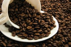 Free Cup With Coffee Beans Royalty Free Stock Photography - 2036657