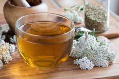 A cup of yarrow tea with fresh yarrow. On a wooden table stock images