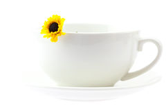 Cup and a yellow flower isolated on white Royalty Free Stock Photos