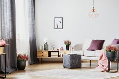 Cupboard and sofa. Wooden cupboard and white sofa in a living room interior with heather stock image