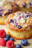 Cupcake with blueberries Stock Photography
