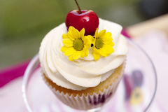 Cupcake with Cherries and Flower. Jam cupcake with mascarpone cream cheese topping cherries and flowers in studio with real background Royalty Free Stock Photo