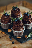 Cupcake. Chocolate with blueberry top stock photos