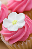 Cupcake closeup Royalty Free Stock Images