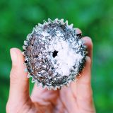 Cupcake. green grass Stock Photography