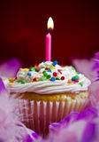 Cupcake with lite candle. Birthday cupcake with lite candle and purple feathers Stock Images