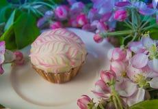 Cupcake of muffin met de verse takken van de de lentebloesem Royalty-vrije Stock Afbeelding