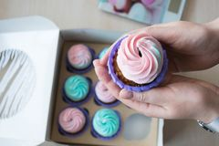 Cupcake with pink and blue cream in the hands of a girl on the background of a box of cupcakes royalty free stock images