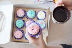 Cupcake with pink and blue cream in the hands of a girl on the background of a box of cupcakes and cup of coffee royalty free stock images