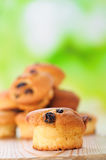 Cupcake with raisins Royalty Free Stock Photography
