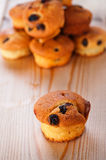 Cupcake with raisins Stock Photography
