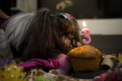 Cupcake for Shihtzu third year birthday